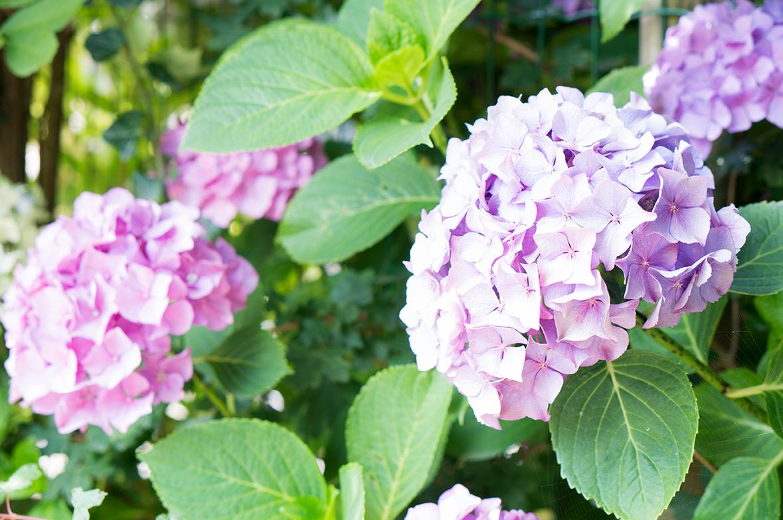 In 7 Schritten zum Traumgarten - das Geheimnis schöner Gärten ...