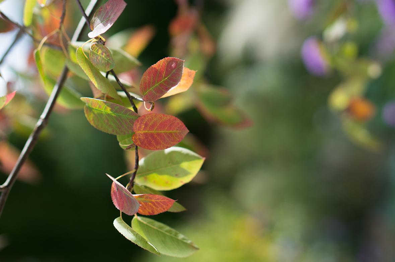 meine 8 besten empfehlungen für bäume und sträucher in kleinen