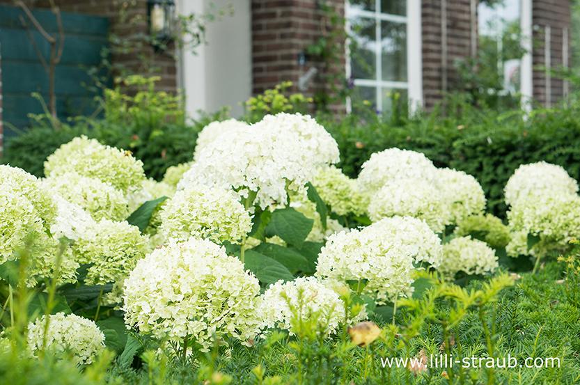 das beste pflanzkonzept f r faule g rtner tipps f r einen pflegeleichten garten lilli straub. Black Bedroom Furniture Sets. Home Design Ideas