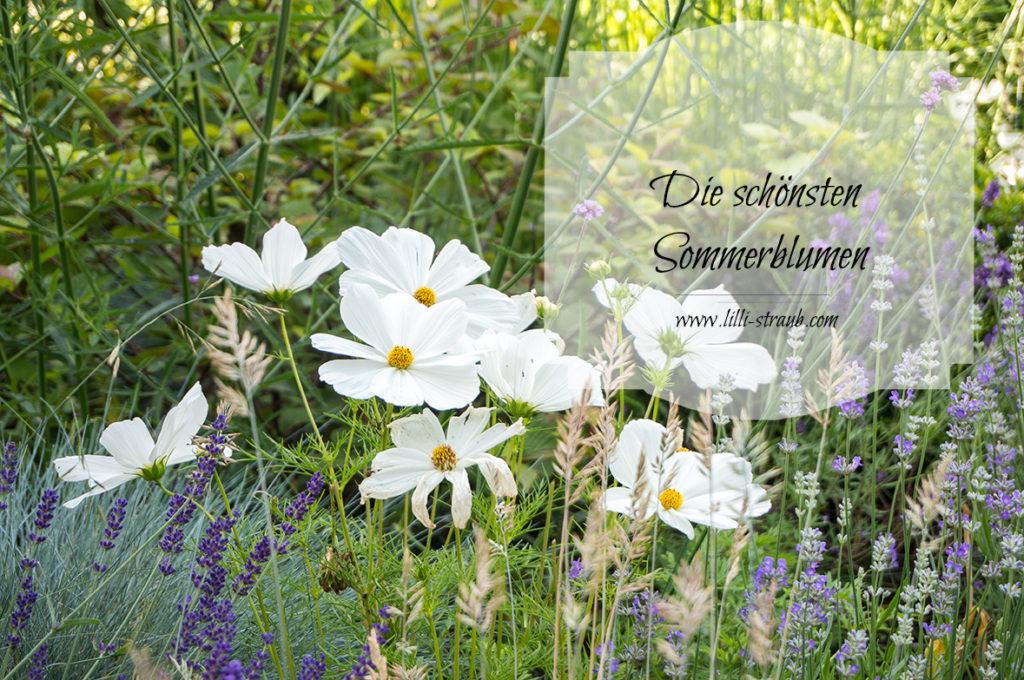 die schönsten Sommerblumen