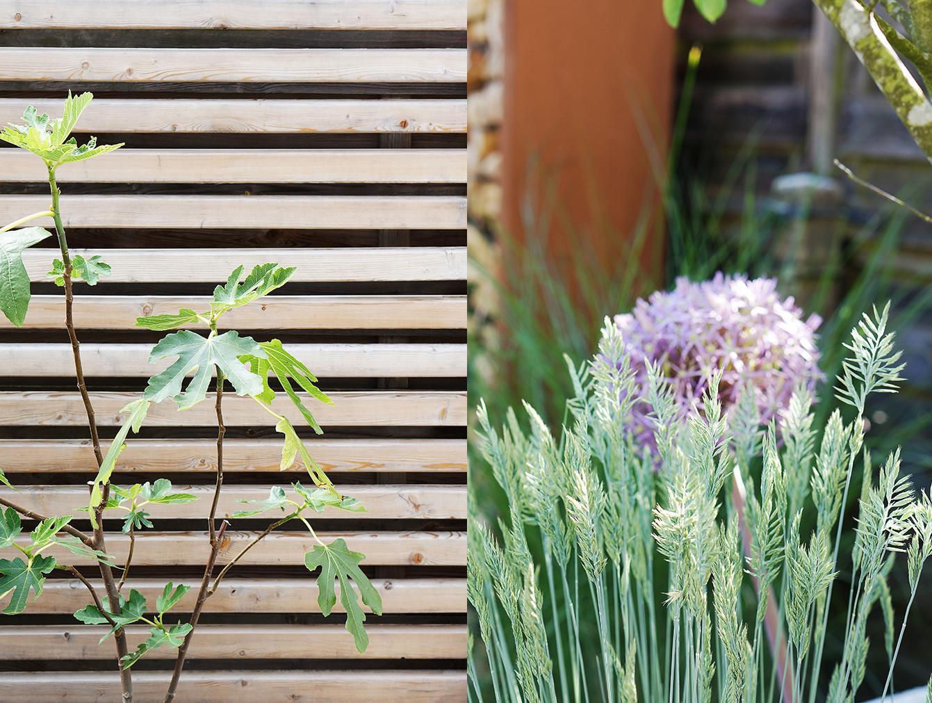 Sichtschutz Im Garten Hecke Oder Zaun Was Passt Besser Zu Ihrem