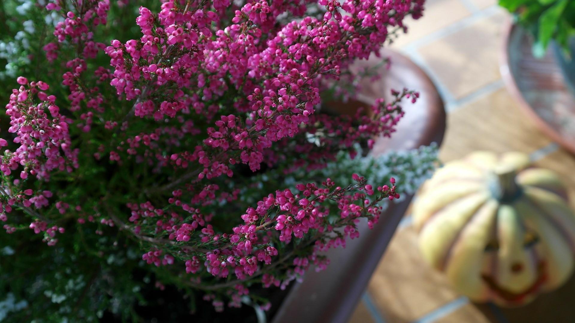 5 ideen f r ihre terrasse im herbst lilli straub den. Black Bedroom Furniture Sets. Home Design Ideas