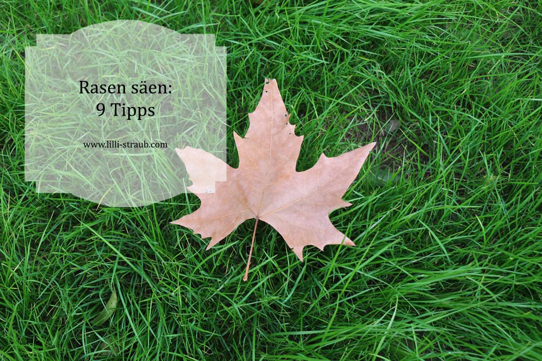 Rasen Säen 9 Tipps Für Einen Schönen Rasen Im Garten Ohne Unkraut