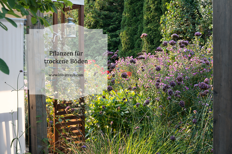Beliebt Bevorzugt Pflanzen für trockene Beete - Lilli Straub - Den Traumgarten planen @WF_48