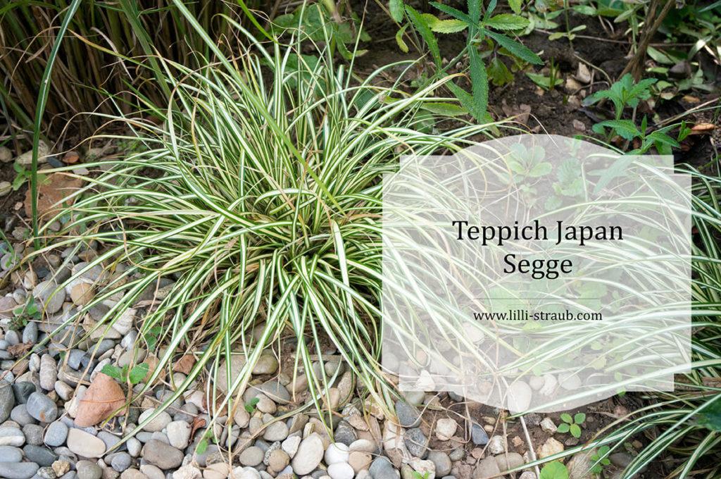 Teppich Japan Segge