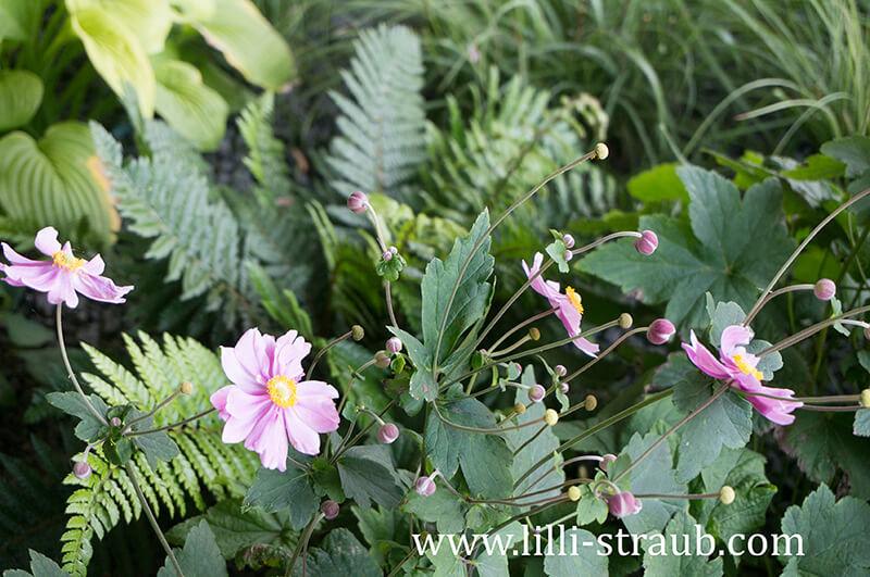 Schattenpflanzen - Anemonen und Farn